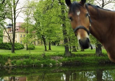Schlösser in Schlesien