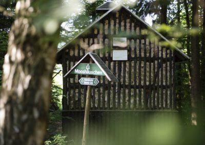 Mooshäuschen im Wald bei Schwarzburg