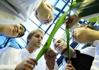 Studenten untersuchen Mais und Getreidepflanzen