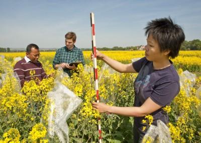 Doktoranden der Agrarwirtschaft  auf einer landwirtschaftlichen Versuchsfläche der Universität Göttingen