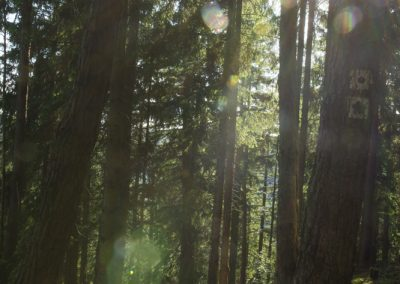 Wanderweg durch den Wald zur Güldenen Kirche