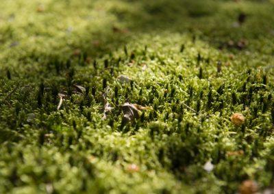 frisches Moos auf Waldwegen im Schwarzatal